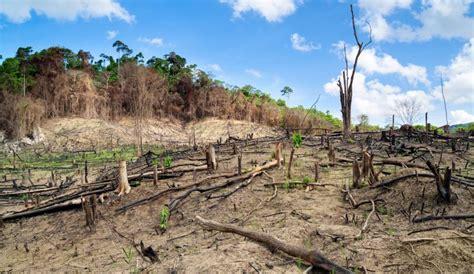 Au Brésil, la déforestation de l'Amazonie explose