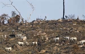 Déforestation massive sur notre planète