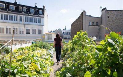 """Des potagers urbains en libre service ? Vive les """"Incroyables comestibles"""" !"""