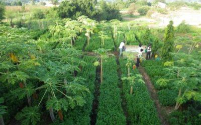 Il est possible de nourrir la planète sans augmenter la surface cultivée