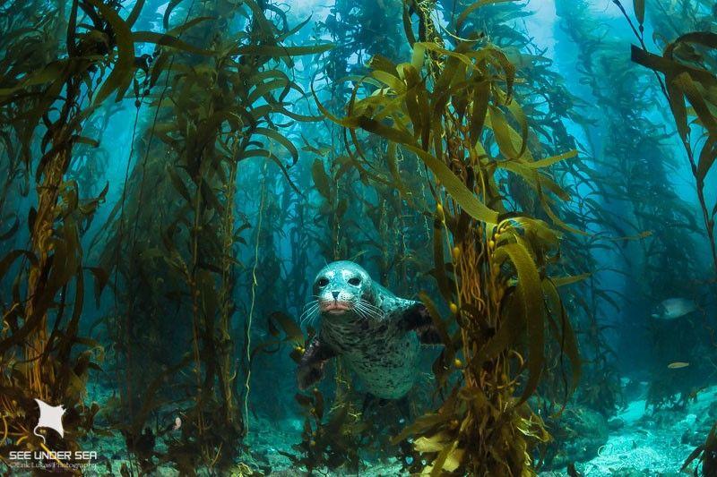 Une agriculture d'avenir : La permaculture marine