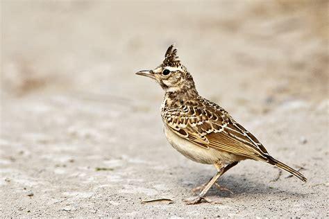 Les pesticides, principale cause de la disparition des oiseaux en France