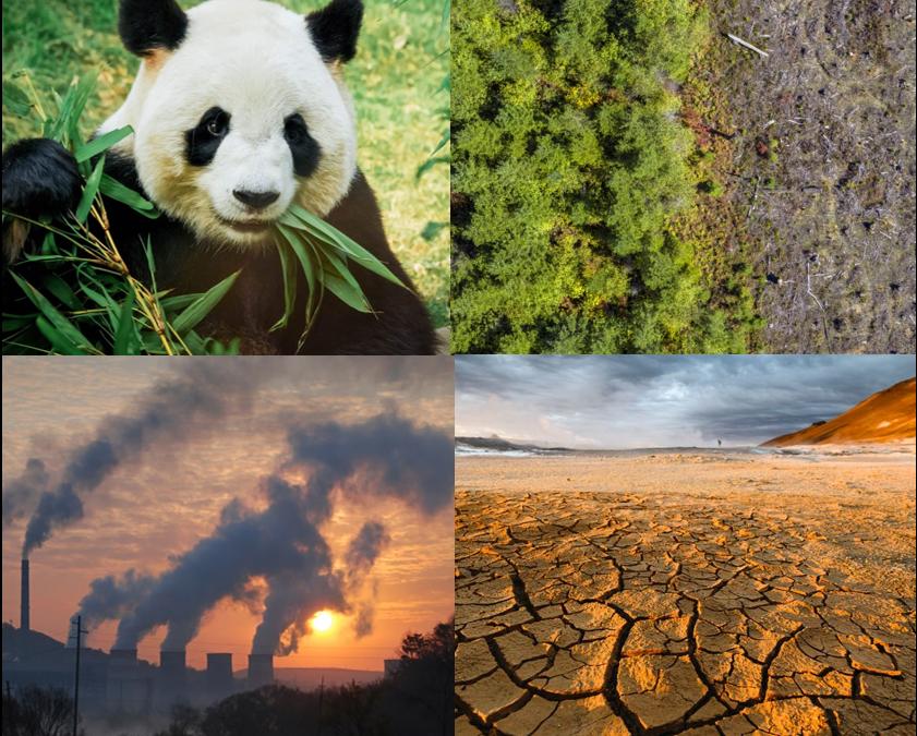 Quelques recommandations face aux problèmes environnementaux