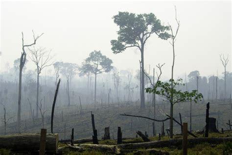 Réchauffement Climatique et Déforestation : les innovations écologiques pour y faire face